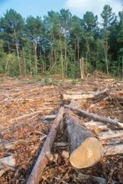 Deforestation in Nigeria